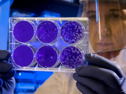 Generic lab cell culture image